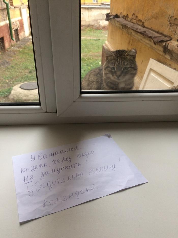 Наш универский кот Кот, Универ, Замечание, Комендант