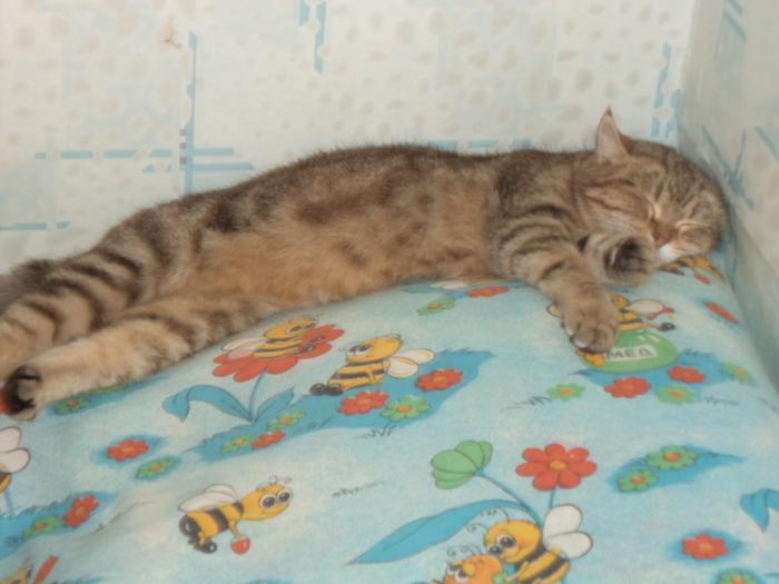 А так спят мои Кот, Сон, Милахи, Длиннопост