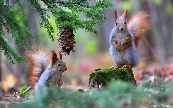 В лесу под ёлкой Белка, Лес, Беседа, Природа, Животные