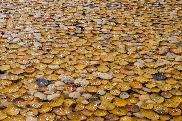 После дождя Фотография, Листья, Осень, Капли, Дождь, Жёлтые листья