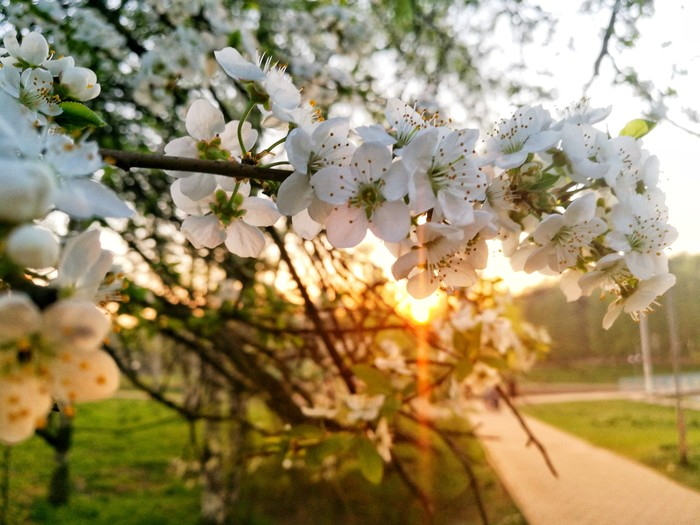 Эх, весна