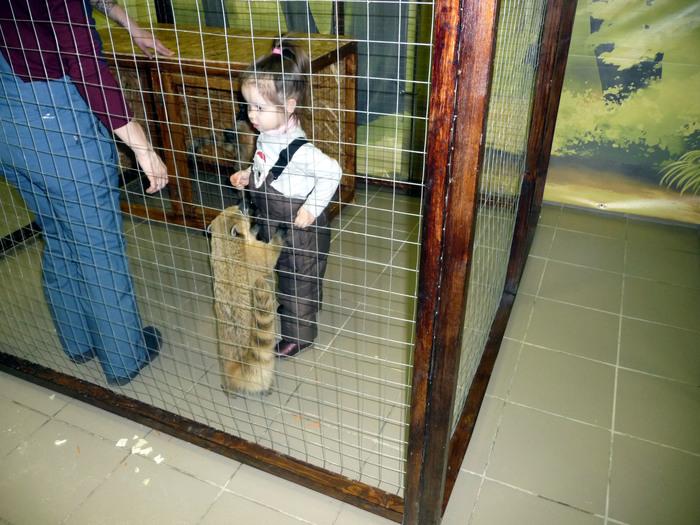 """Как мы ходили в """"зоопарк"""" Омск, Я люблю Омск, Зоопарк, Контактный уголок, Коати, Носуха, Длиннопост"""