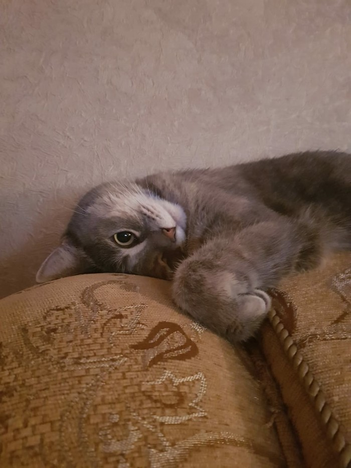 Жизнь-боль.... Шарик под диван закатился