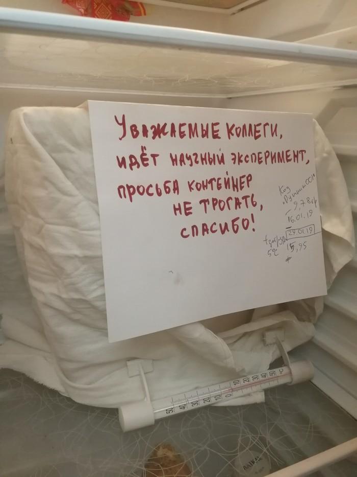 Пушкин в холодильнике Летучая мышь, Зимовка, Дикие животные, Длиннопост