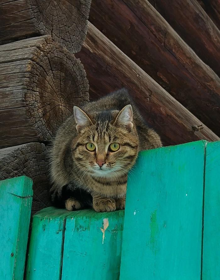 Котика вам Кот, Фотография