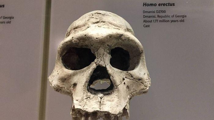 Австралийские ученые: предок человека вымер из-за лени Наука, Антропогенез, Антропология, Человек