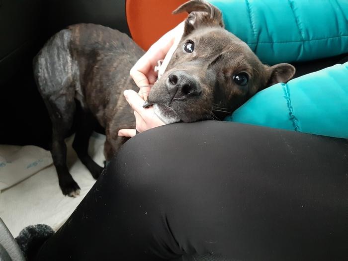 Джек нашел Дом Гродно, Беларусь, Собака, Помощь животным, Спасение животных, Доброта, Длиннопост