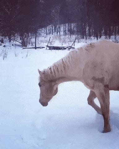 Лошадь впервые наслаждается снегом