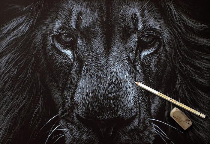 Дикие животные Арт, Картинки, Искусство, Благотворительность, Дикие животные, Зоозащитники, Richard Symonds, Длиннопост