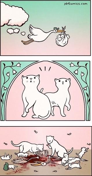 Корм принёс котят