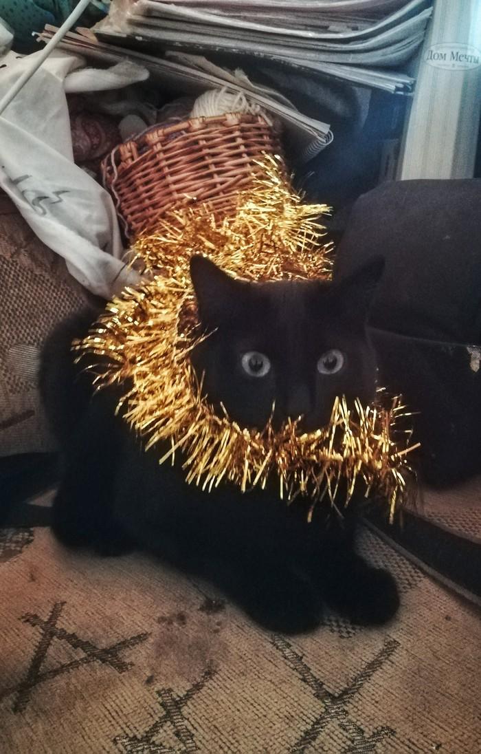 Я и Новый год Кот, Новый Год, Черный кот, Мишура, Ненависть