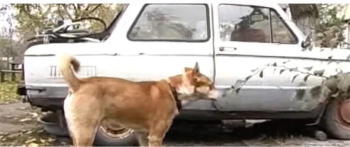 Пёс в запорожце. Копипаста, Собака, Запорожец, Добро, Астрахань, Длиннопост