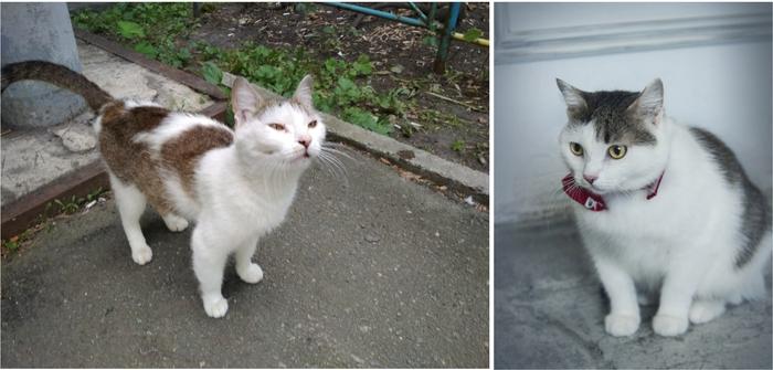 До и после Кот, Котомафия, Спасение животных, Приют для животных, Приют Три Товарища, Челябинск, В добрые руки