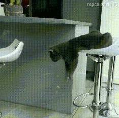 Принцип жизни кота Кот, Цель, Лень, Гифка