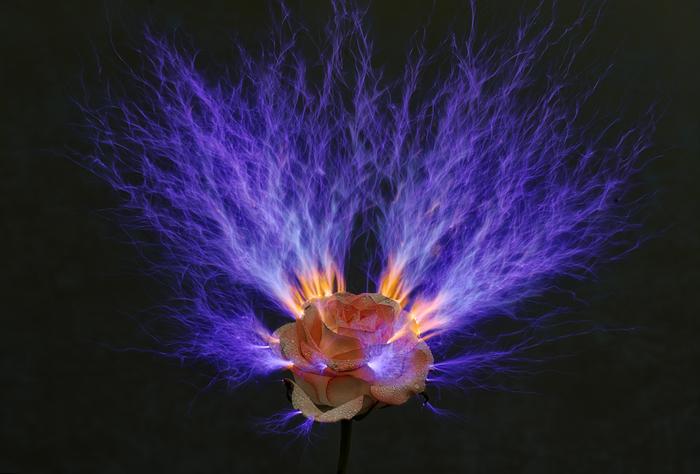 Огонь и капли росы Молния, Цветы, Роса, Капли, Роза, Искры, Темнота, Фотография