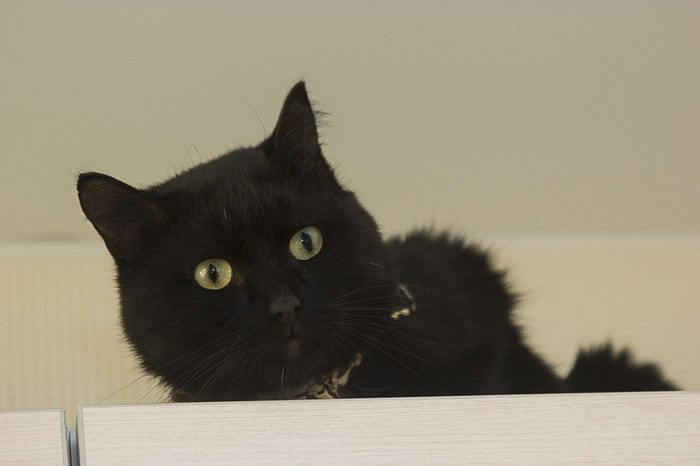 Джон Коффи уехал в новый дом! Кот, Котомафия, Приют для животных, Приют Три Товарища, Челябинск, Длиннопост