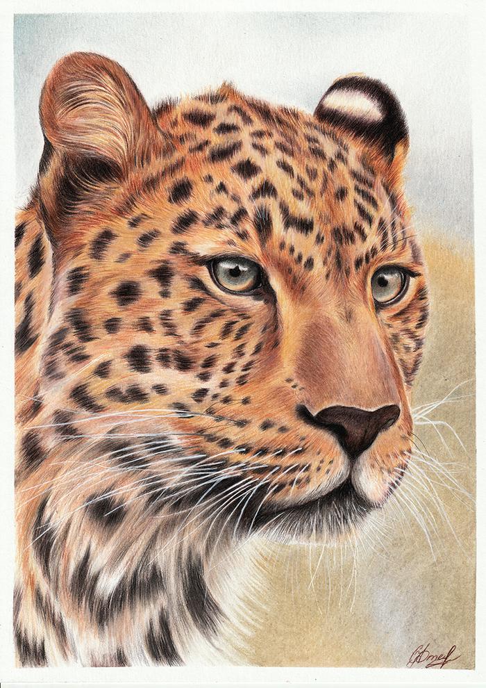 Леопард Леопард, Рисунок, Творчество, Цветные карандаши, Большие кошки