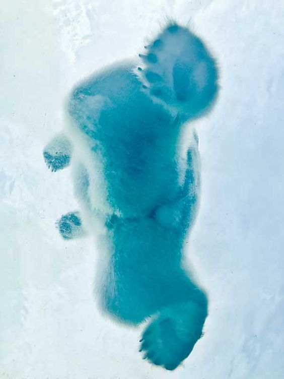 Медведь вид снизу