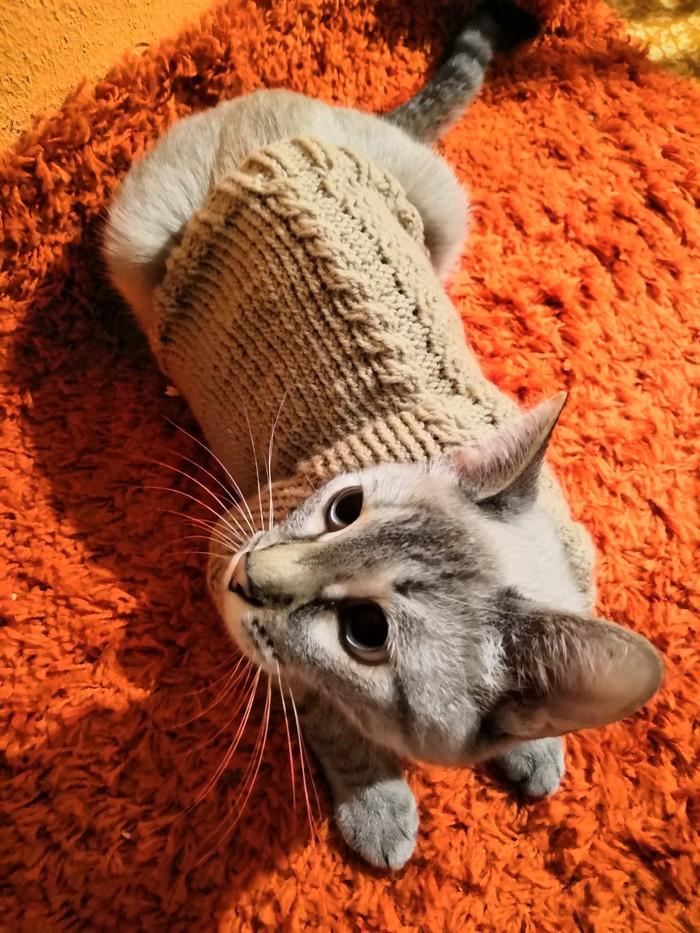 Свитер для кошки Вязание, Свитер, Кот, Котомафия