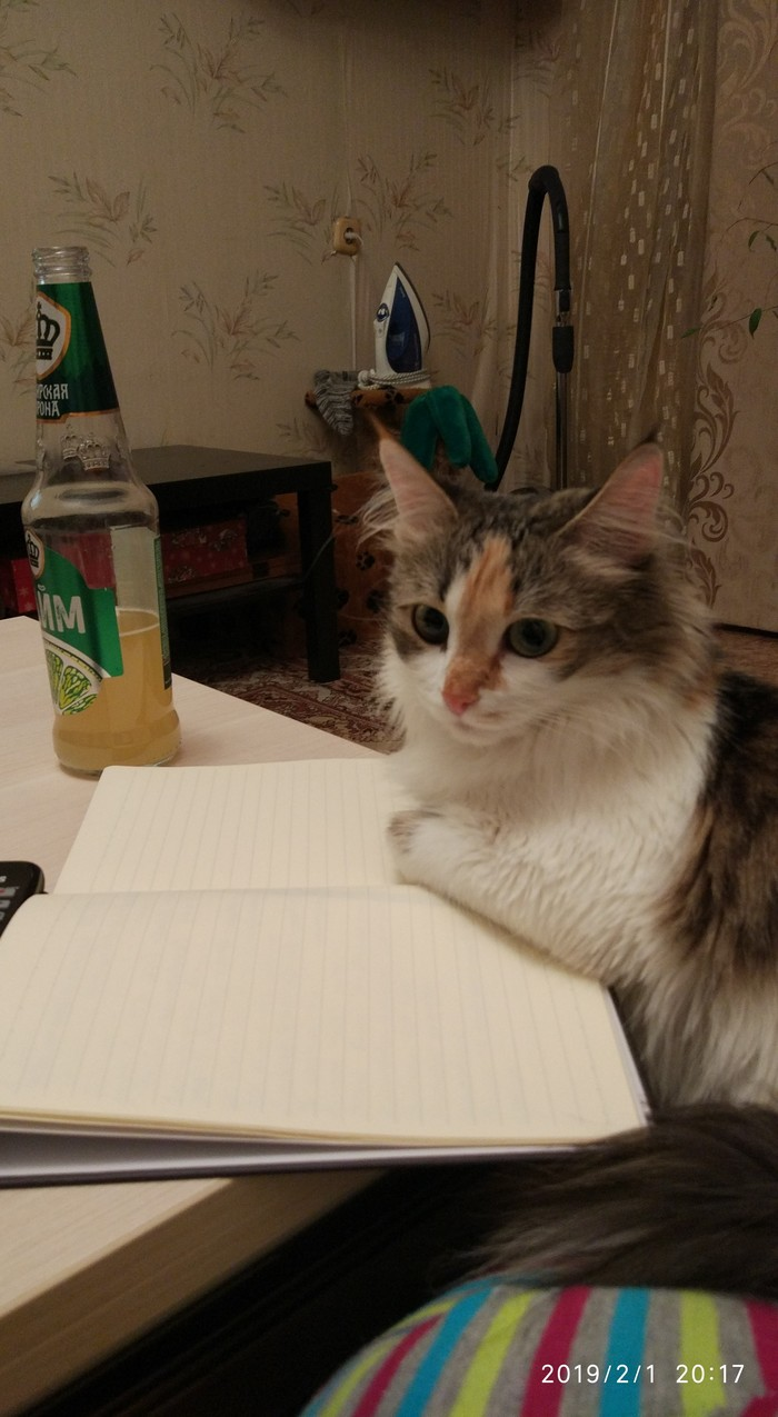 Жизнь писателя Кот, Котомафия, Писатель, Вдохновение, Длиннопост