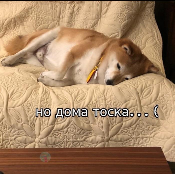 Моя жизнь Жизнь, Длиннопост, Грусть, Стихи, Собака