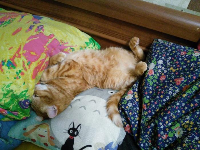 Субботний отдых :) Кот, Фотография, Отдых, Балдеж, Длиннопост