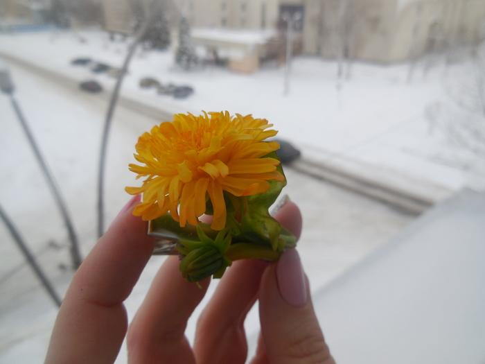"""Заколка """"Скоро весна))"""" из *холодного фарфора*... Заколка, Рукоделие без процесса, Ручная работа, Длиннопост, Холодный фарфор, Одуванчик"""
