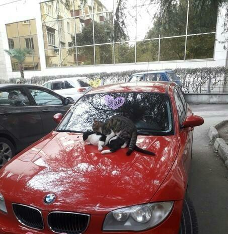 Типичный Якутск и тем временем в Сочи Якутия, Сочи, Погода, Холодно, Тепло, Мартовские коты