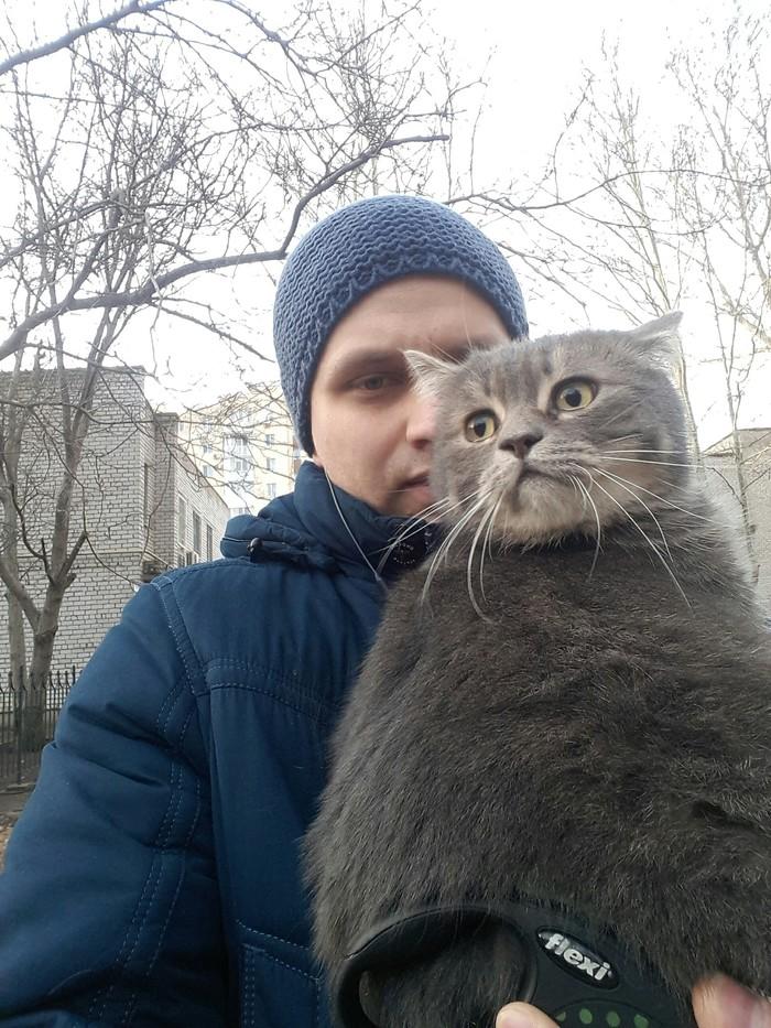 Николаев найден кот или кошка Кот, Найден кот, Николаев, Длиннопост, Без рейтинга