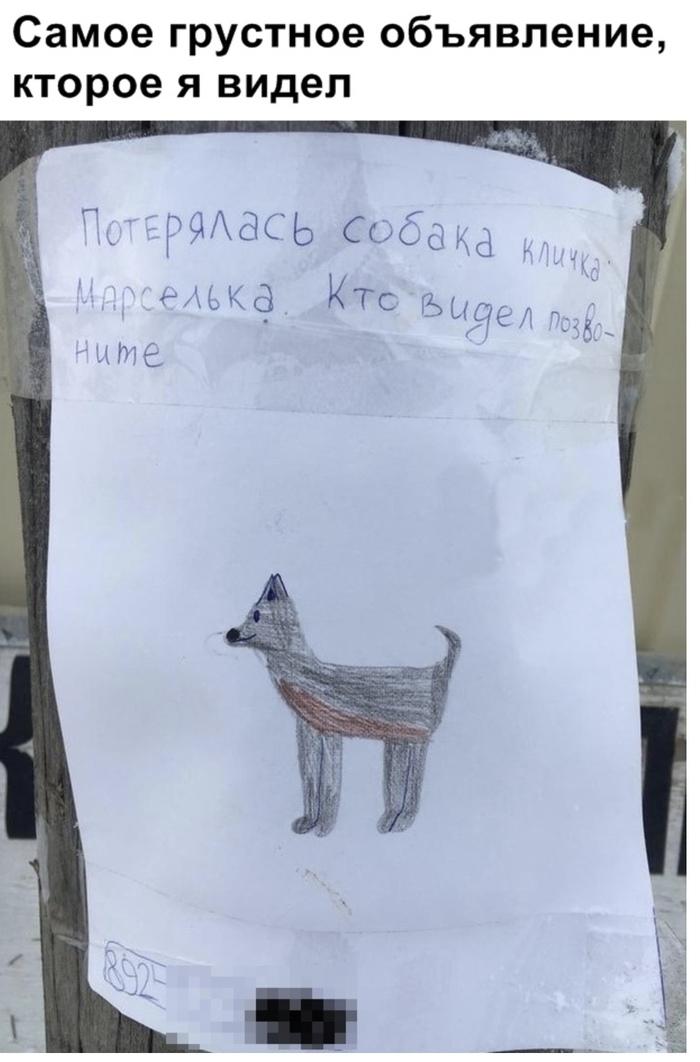 Марселька Марселька, Собака, Пропажа
