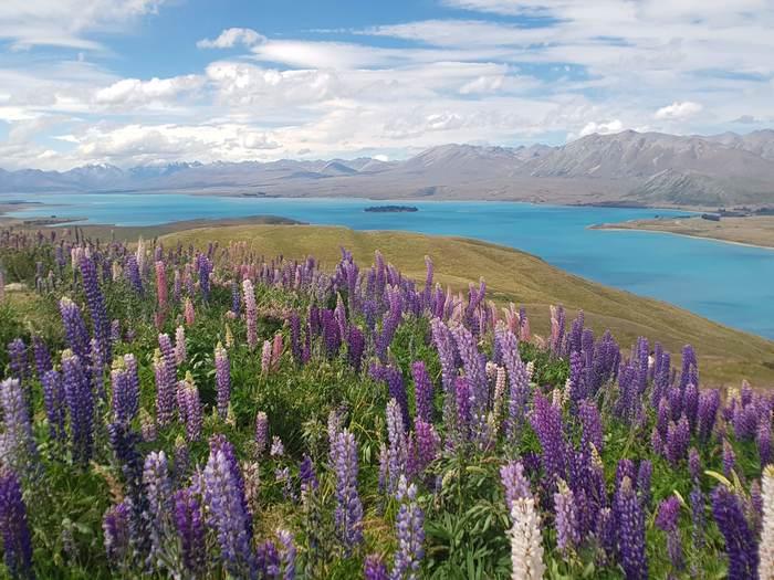 Как я уехал в Новую Зеландию часть 1 Длиннопост, История, Новая зеландия, Переезд, Видео