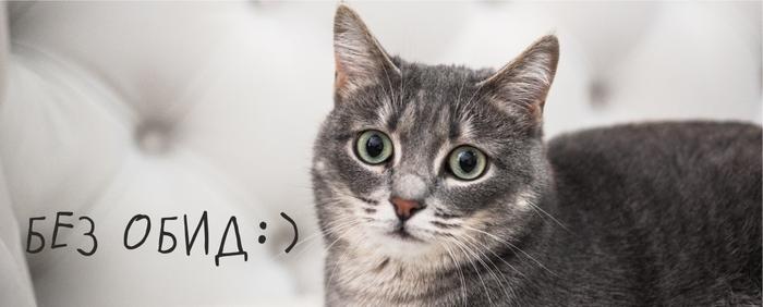 Владельцам питомцев (результат анкетирования) Без рейтинга, Приют для животных, Анкета, Приют Три Товарища, Кот, Собака, Челябинск, Результат, Длиннопост