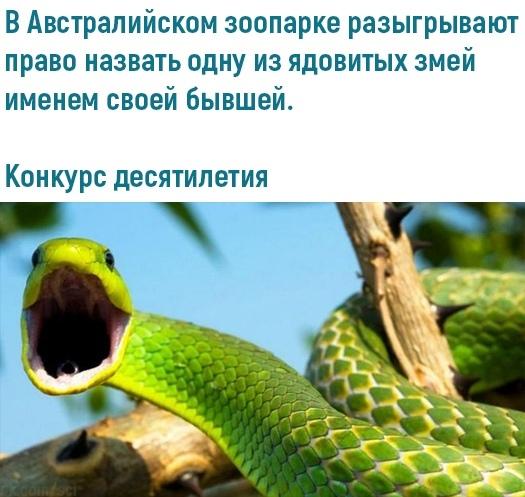 Топ-конкурс Мемы, Змея, Конкурс, Бывшая, Отношения