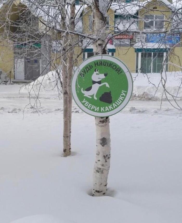 Будь няшкой) Нижний Новгород, Домашние животные, Городская среда, Чистота