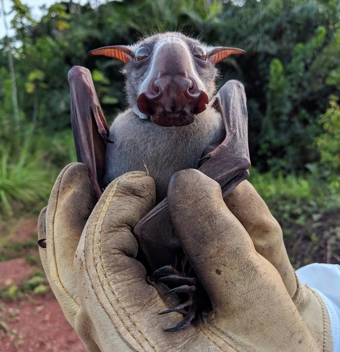 Эта инопланетная тварь - просто малыш летучей мыши Существо, Летучая мышь, Twitter