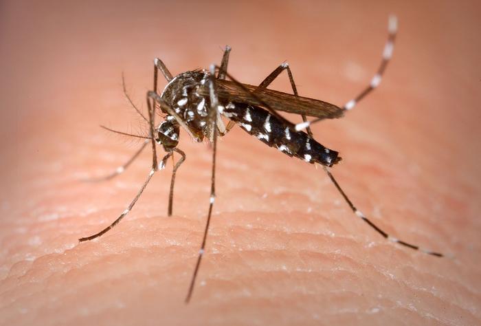 Группа исследователей создала комаров, устойчивых к вирусу Зика Вирус Зика, Комары, Эпидемия