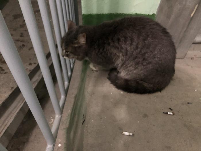 Найден кот (или кошка) Екатеринбург Найден кот, Найденыш, Потеряшка, Кот, Екатеринбург, Отдам, В добрые руки, Без рейтинга