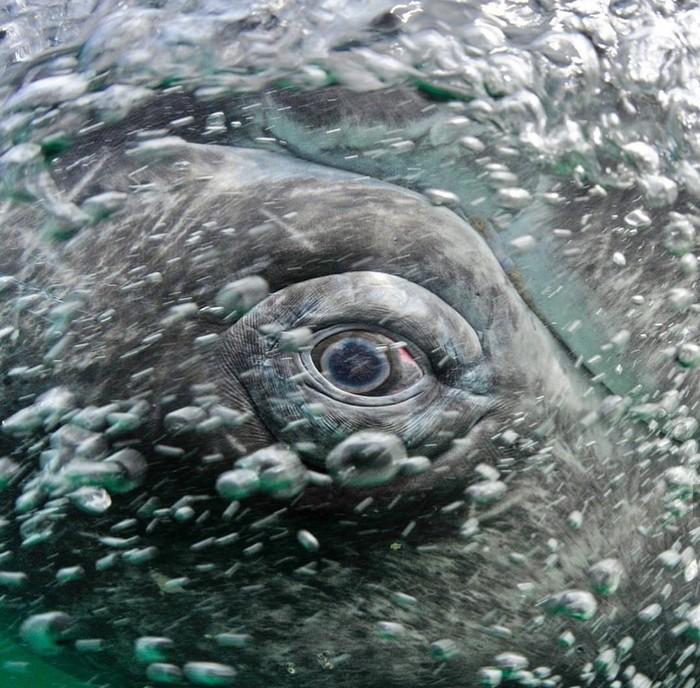 Кит Кит, Фотография, Океан