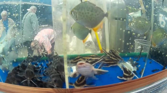 Командировка в рыбхоз Командировка, Рыбхоз, Рыба, Толстолобик, Кровь, Приключения, Биология, Длиннопост