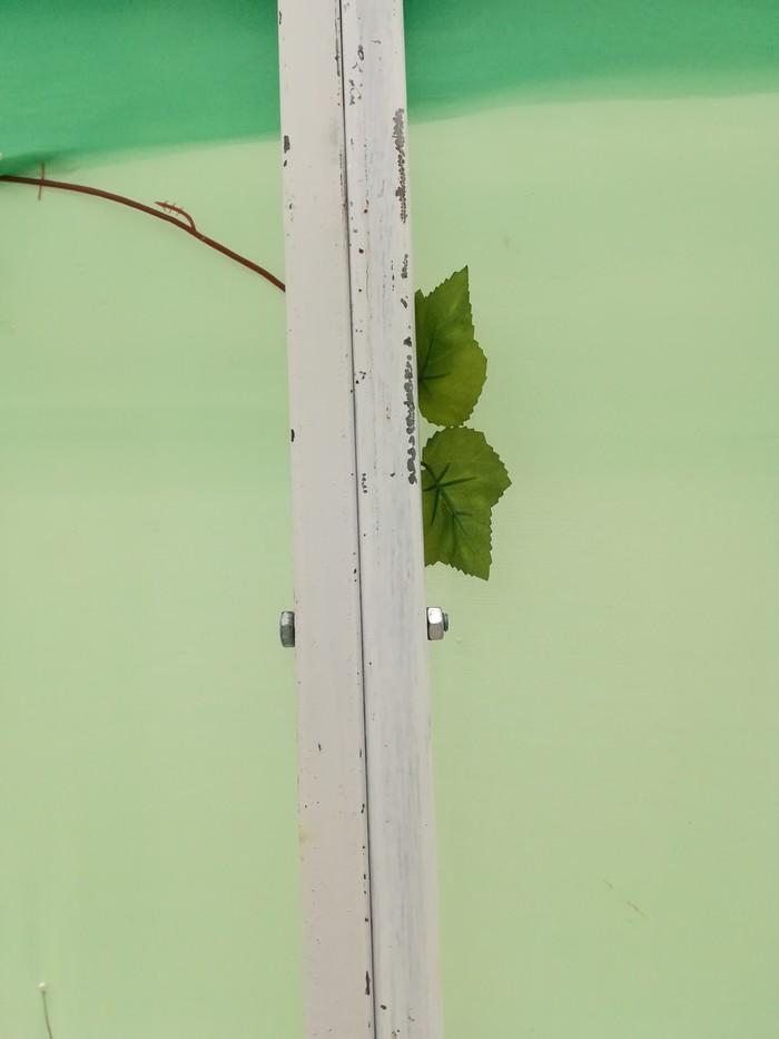 Выставка бабочек как бизнес. Часть 2 из 7. Оборудование и все все все. Длиннопост, Бизнес, Бабочка, Выставка