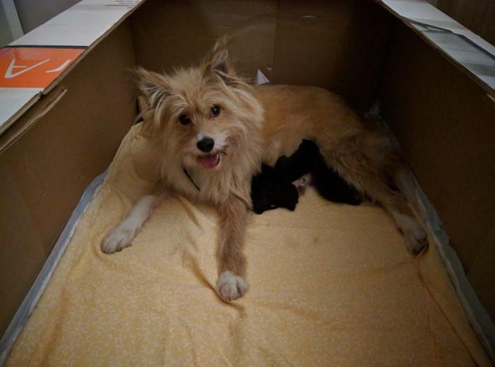 Сюрприз в год собаки Без рейтинга, Щенки, Помощь животным, Собака, Длиннопост