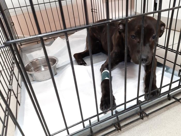 Пес ищет дом Собака, Беларусь, Гродно, Помощь животным, В добрые руки, Длиннопост, Без рейтинга