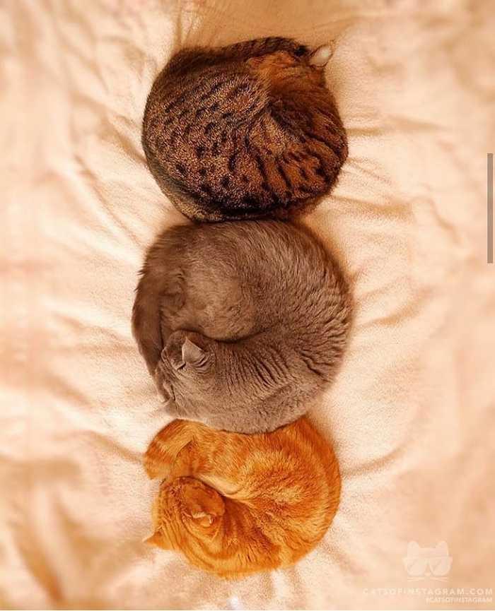 Пятничные коты Кот, Instagram, Фотография, Милота, Длиннопост