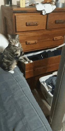 Кошка недоумении