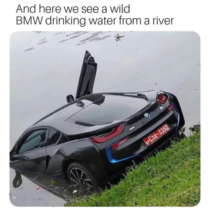 А здесь мы видим дикую БМВ пьющую воду из реки.