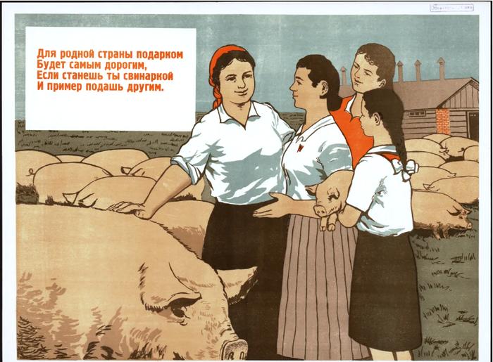 Свинский агитпроп Лига историков, Советские плакаты, Агитация, Животноводство, СССР, Длиннопост