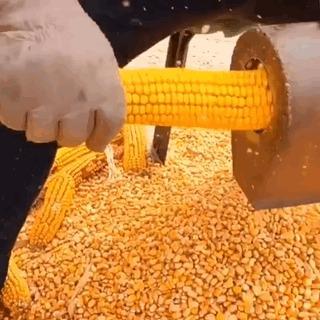 Разделка кукурузы. Кукуруза, Технологии, Разделка, Гифка