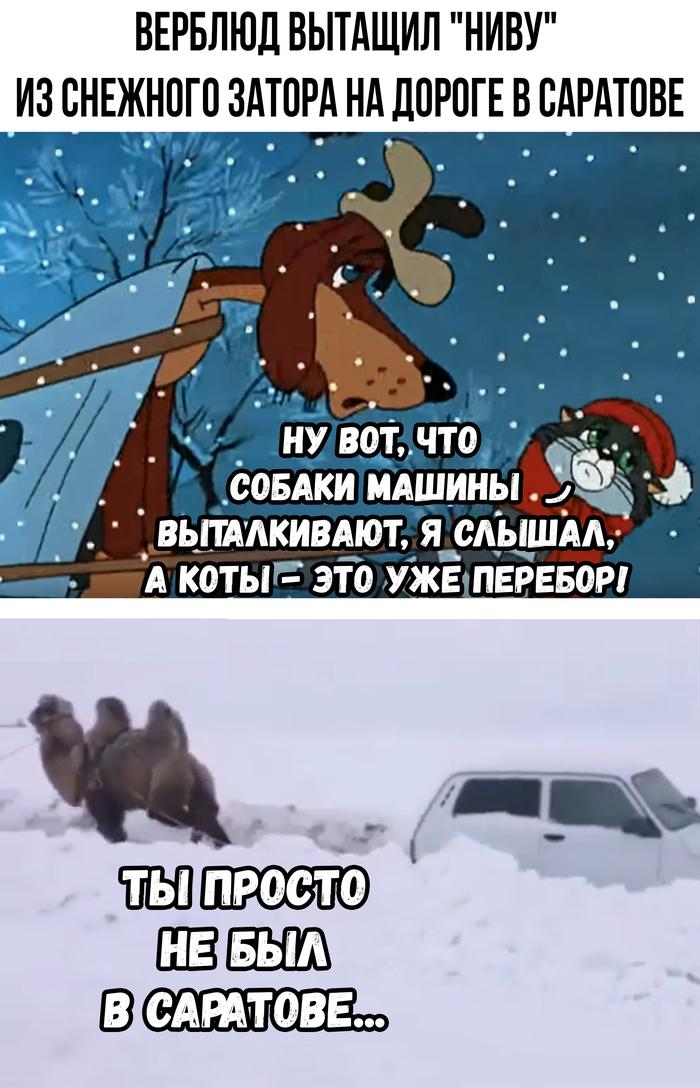 Суровые саратовские верблюды Россия, Саратов, Смех, Жизнь