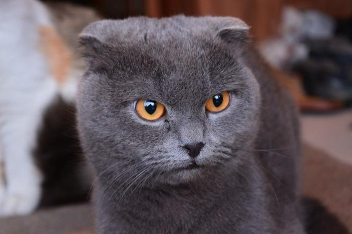 Пропал кот! Домодедово-Востряково Без рейтинга, Кот, Помогите найти, Домодедово, Длиннопост