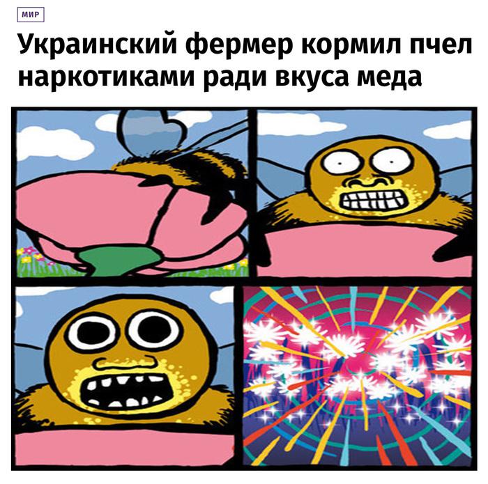 Неправильный мёд Новости, Украина, Фермер, Пчелы, Наркотики, Задержание, Мед